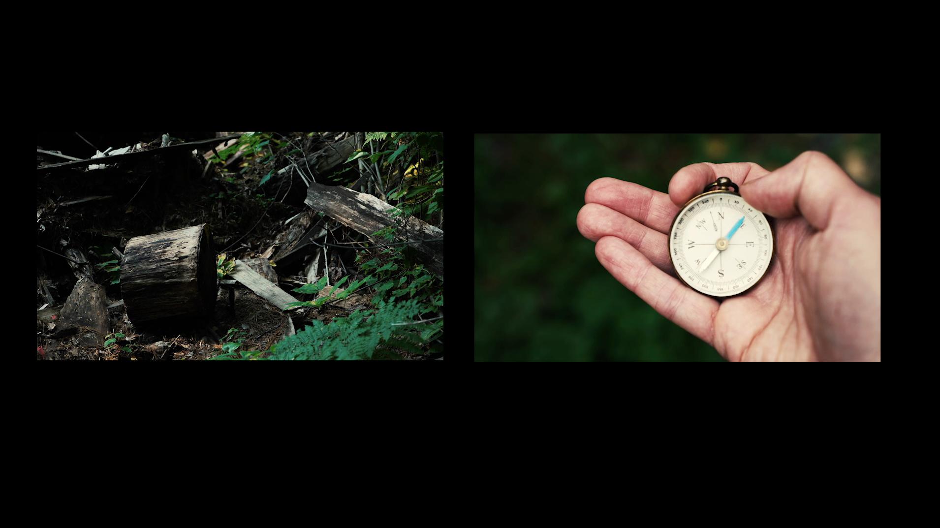 A hand holding a pocket watch, a tree stomp.